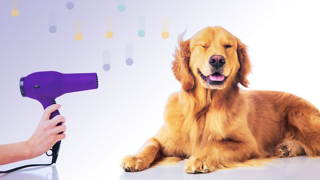 Professional Dog Grooming Supplies- Make Your Business A Success
